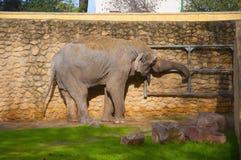 Big elephant opening the door, in the zoo stock images