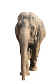 Big elephant over white Royalty Free Stock Photo