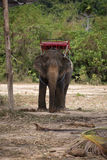 Big elephant Royalty Free Stock Photos