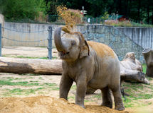 Big elephant playing in zoo. Big elephant playing witj sand in zoo Royalty Free Stock Photos