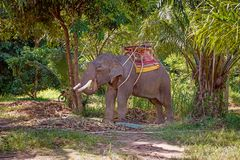 Big elephant rests between tourists ridings. Big elephant rests between tourists riding in tropical greens shadow Royalty Free Stock Photography