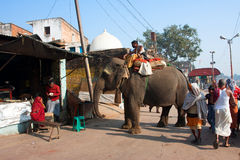 Big elephant walking around the indian town. In Chitrakoot, India. Total population of Chitrakoot is 22,294. By the legend, god Rama lived here 11 years Royalty Free Stock Photos