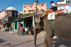 Big elephant walking down the sunny street. Big elephant walking down the sunny indian street in Chitrakoot, India. Population of Chitrakoot is 22,294. By the Royalty Free Stock Image
