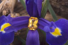 Big emerald cut yellow sapphire on flower royalty free stock images