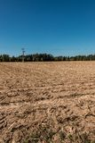 Big empty corn field with little forest stock photos