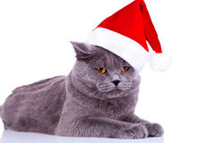 Big english cat wearing a santa hat Royalty Free Stock Photography