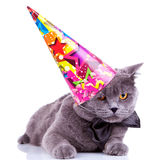 Big english party cat Royalty Free Stock Image