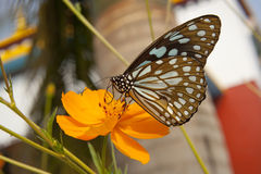 Big exotic blue butterfly Stock Image