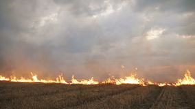 The big extensive fire in the field.  stock video