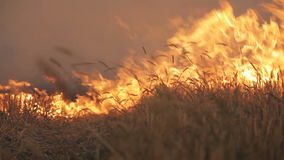 The big extensive fire in the field.  stock video footage