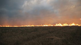 The big extensive fire in the field.  stock footage