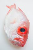 Big eye fish Stock Photos