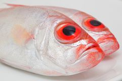 Big eye fish Royalty Free Stock Photography