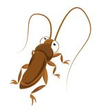 Big-eyed cockroach Royalty Free Stock Image
