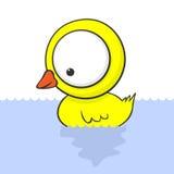 Big-eyed Duck Stock Photo