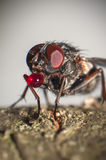 Big eyed fly with balloon Royalty Free Stock Photos