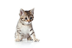 Big eyed little kitten Royalty Free Stock Photo