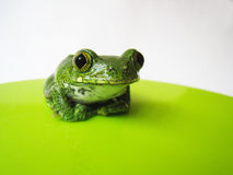 Big-eyed tree frog (2) leptopelis vermiculatus Royalty Free Stock Photography