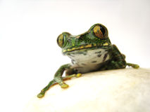 Big-eyed tree frog (13) leptopelis vermiculatus Stock Photography
