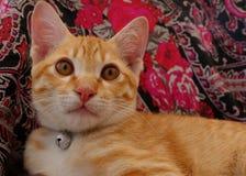 Big eyes baby cat. Cute vintage kitten Stock Image
