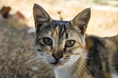 Big eyes cat pictures, great stray cats, cat eyes the most beautiful.listened cats, the most beautiful cat eyes, pet cat pictures,. Eating cats, cats, eating the stock image