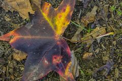 The Big Fall Leaf of Many Colors. `The Big Fall Leaf of Many Colors` is photo taken at Cooper Creek Park, located in Columbus, Georgia royalty free stock image