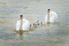Big family. stock photography