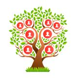 Big family tree template with people icons. Family tree template concept with people icons and colorful green leaves for life generations history. EPS10 vector royalty free illustration