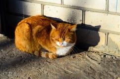 Big fat ginger cat Stock Photo