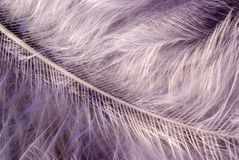 Big feather Stock Photos