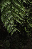 Big fern at Levada Madeira stock image
