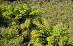 Big fern tree Royalty Free Stock Photos