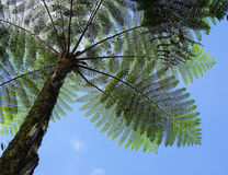 Big fern tree at the park Royalty Free Stock Images