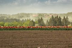 Big field of colorful flowers and yellow rapeseed royalty free stock images