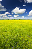 Big field of flowers Stock Images