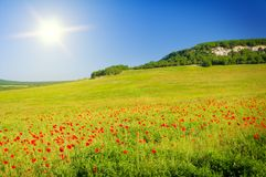 Big field of flowers on sunrise. Royalty Free Stock Photography