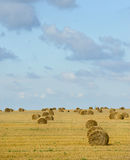 Big field with round sheaves of yellow straw after a crop harvest Royalty Free Stock Image