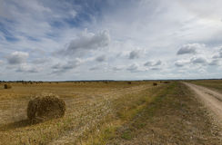 Big field with round sheaves of yellow straw after a crop harvest Stock Image