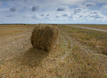 Big field with round sheaves of yellow straw after a crop harvest Royalty Free Stock Photos