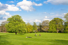 Big field with trees Royalty Free Stock Photography