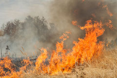 Big fire on agricultural land near forest Stock Images