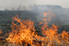 Big fire in the dry grass field royalty free stock images