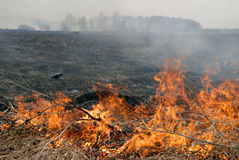 Big fire in the dry grass field. royalty free stock photos
