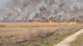 Big fire in the field blown by a strong wind. Ukraine, slow motion stock video