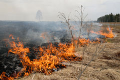 Big Fire In The Dry Grass Field. Royalty Free Stock Photo