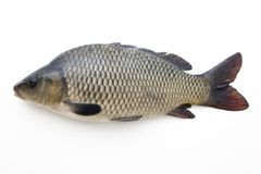 Big fish Royalty Free Stock Photography