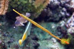 Tropical fish in aquarium at ocean, sea salt creature. Big fish in aquarium beautiful animal at ocean Stock Photos