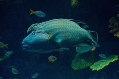 Big fish Royalty Free Stock Photo