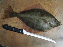 Big fish flounder Stock Photos