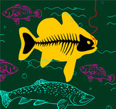 Big fish great catch Royalty Free Stock Images